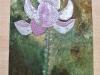 Michèle : Fleurs de lotus