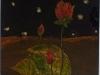 René : Fleurs de lotus (deuxième oeuvre)